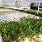 Mangrovia Scicli acquaponica idroponica orto bio
