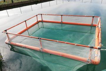 Gabbia allevamento pesce persico trota laghetto lago acquacoltura vendita
